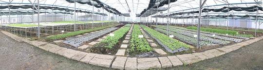 Trang trại Veeteq Farm