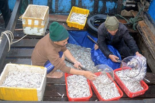 Ngư dân bán cá cho thương lái