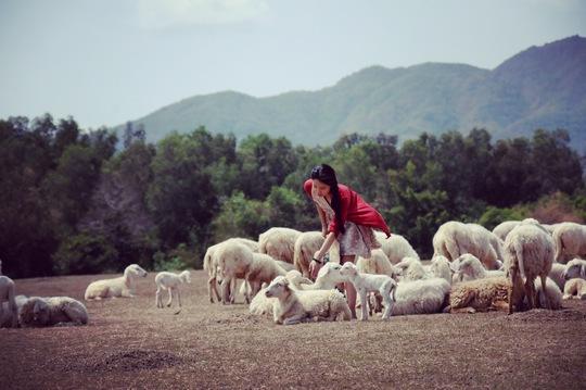 Cánh đồng cừu là nơi thu hút nhiều du khách trẻ trong vài năm trở lại đây