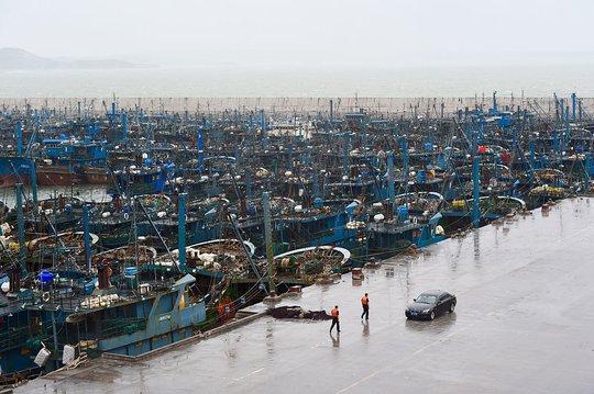Tàu cá nằm cảng ở Phúc Kiến. Ảnh: Tân Hoa Xã