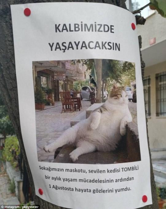 Bản cáo phó của Tombili cũng in hình ảnh dáng ngồi nổi tiếng của chú mèo ú này. Ảnh: Instagram