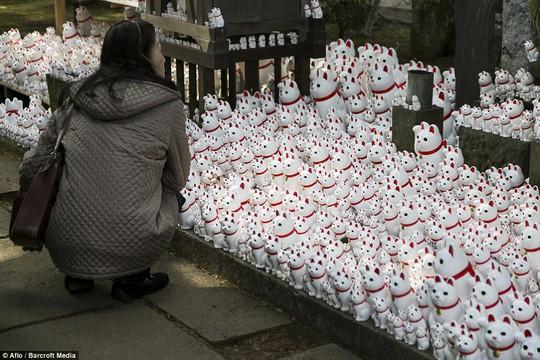 Mèo gật đầu được trưng bày tại Đền Goutoku tại thủ đô Tokyo hôm 26-1