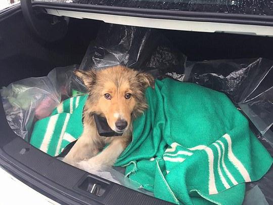 Cảm động chú chó xả thân che chở bạn mắc kẹt trên đường ray