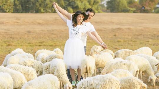 Một cặp đôi đang tạo hình bên những chú cừu