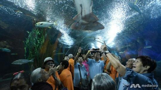 Underwater World hoạt động từ tháng 5-1991 nhưng đóng cửa vào cuối tháng 6 do không cạnh tranh được với các điểm tham quan hồ cá tương tự. Ảnh: MEDIA CORP
