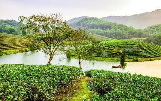 Chốn bình yên và khung cảnh trữ tình ở đảo chè Cầu Cau khiến bao người mê đắm (Ảnh Son Viet).