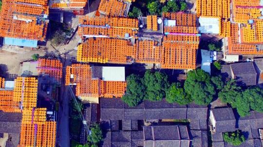 Ngôi làng vàng rực trong mùa hồng khô ở Trung Quốc