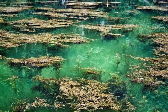 Nước tại ao đặc biệt trong vắt, có thể nhìn thấu đáy. Các loài tảo, sinh vật nước phát triển mạnh mẽ, càng làm khung cảnh thêm huyền bí và thơ mộng.