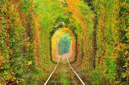 Đường hầm tình yêu nổi tiếng tại Ukraine. Con đường phủ cây xanh dài khoảng 3 - 4 km nhưng đẹp tựa như cổ tích.         Hoa anh đào nhuộm hồng một góc trời Stockholm, Thụy Điển.         Con đường tím ngắt mộng mơ ở Grafton, Australia.         Những cây hoa giấy trổ bông trong một con hẻm nhỏ của thị trấn cảng Nafplio, Peloponnese, Hy Lạp.         Phượng tím nở hoa rực rỡ dọc con đường tại Cullinan, Nam Phi.         Con hẻm tình tứ hoa lá ngập tràn này rất nổi tiếng ở Spello, Italy, xuất hiện trong nhiều cuốn tạp chí.         Con đường phủ kín cây xanh như rừng này nằm ở thành phố Porto Alegre, thủ phủ bang Rio Grande do Sul, Brazil.         Mùa thu về trên một con phố của thủ đô Washington, Mỹ khi những tán cây ngả vàng, rụng đầy đường.         Những thân cây kỳ lạ trên một con đường ở Jerez, Tây Ban Nha.         Hoa gạo mùa xuân bên một con đường của Đài Loan.