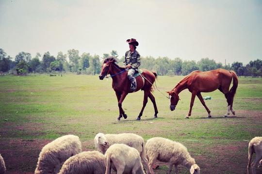 Gã nài ngựa