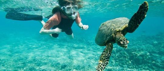 Những điểm lặn độc đáo nhất thế giới