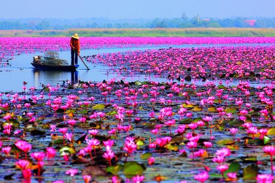 Cách Nong Khai 55 km, Udon Thani là tỉnh có nền kinh tế phát triển hơn nhưng không vì thế mà mất đi vẻ đẹp tự nhiên vốn có. Một trong số đó là Red Lotus Sea, nơi trồng hàng triệu bông hoa sen, súng, bừng nở từ tháng 11 đến tháng 2 năm sau. Khách đến đây sẽ được ngồi thuyền đi dọc lòng hồ để đến gần hơn những bông hoa rực rỡ. Ảnh: Bangkok101.