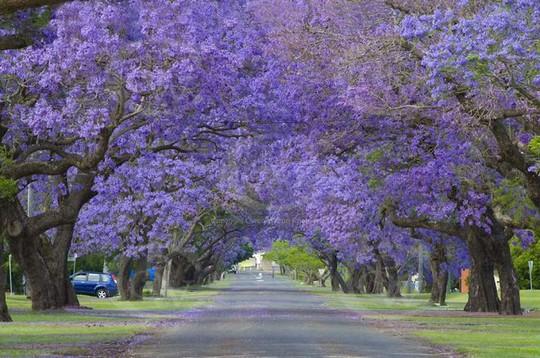 Con đường tím ngắt mộng mơ ở Grafton, Australia.         Những cây hoa giấy trổ bông trong một con hẻm nhỏ của thị trấn cảng Nafplio, Peloponnese, Hy Lạp.         Phượng tím nở hoa rực rỡ dọc con đường tại Cullinan, Nam Phi.         Con hẻm tình tứ hoa lá ngập tràn này rất nổi tiếng ở Spello, Italy, xuất hiện trong nhiều cuốn tạp chí.         Con đường phủ kín cây xanh như rừng này nằm ở thành phố Porto Alegre, thủ phủ bang Rio Grande do Sul, Brazil.         Mùa thu về trên một con phố của thủ đô Washington, Mỹ khi những tán cây ngả vàng, rụng đầy đường.         Những thân cây kỳ lạ trên một con đường ở Jerez, Tây Ban Nha.         Hoa gạo mùa xuân bên một con đường của Đài Loan.