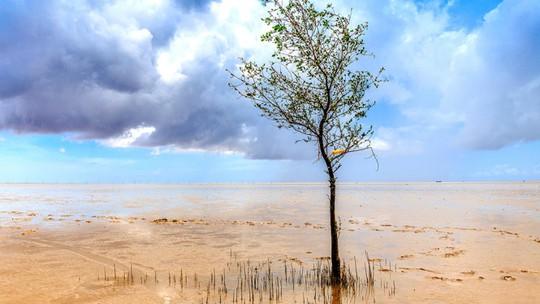 Cây cô đơn ở biển Mỏ Ó, Trần Đề - Ảnh: Nam Phạm
