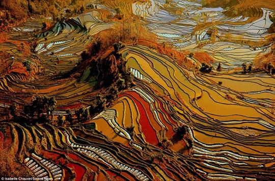 Ruộng bậc thang đầy màu sắc lạ mắt ở Vân Nam