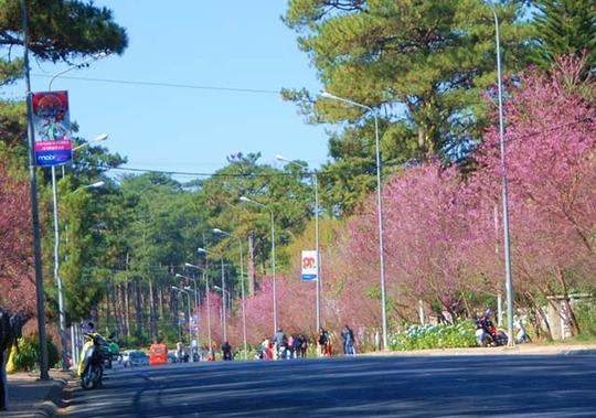 Hoa nở rực rỡ dọc hai bên đường.