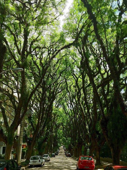 Con đường phủ kín cây xanh như rừng này nằm ở thành phố Porto Alegre, thủ phủ bang Rio Grande do Sul, Brazil.         Mùa thu về trên một con phố của thủ đô Washington, Mỹ khi những tán cây ngả vàng, rụng đầy đường.         Những thân cây kỳ lạ trên một con đường ở Jerez, Tây Ban Nha.         Hoa gạo mùa xuân bên một con đường của Đài Loan.