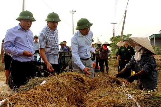 Các địa phương huy động các lực lượng gặt lúa giúp dân