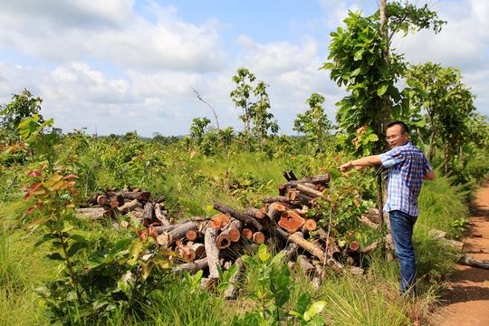 Bắt giám đốc phá trắng 49 ha rừng - Ảnh 1.