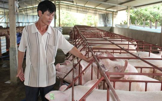 Đây được xem là cuộc khủng hoảng thịt heo lớn nhất tại nước ta trong hàng chục năm qua.