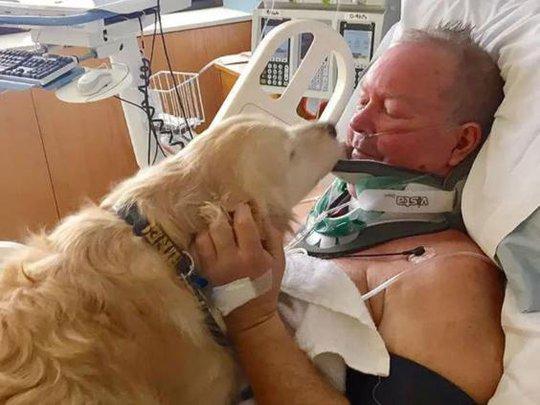 Cô chó Kelsey bên giường bệnh của ông Bob. Ảnh: INDEPENDENT