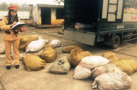 Số bì heo thối được lực lượng CSGT Thanh Hóa phát hiện, bắt giữ vào rạng sáng ngày 26-1 (tức ngày 29 Tết)