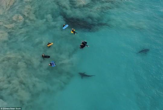 Kinh hoàng nhóm học sinh bơi lội bên trên 400 con cá mập - Ảnh 1.