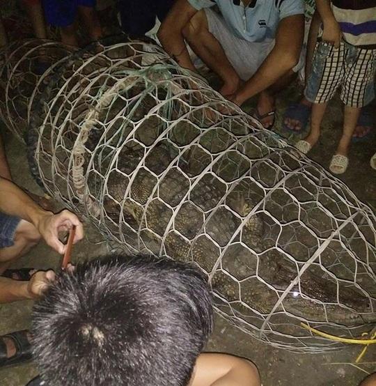 Trẻ em hốt hoảng phát hiện cá sấu trên sông ở Hà Nội - Ảnh 1.