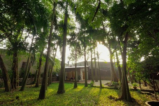Nhà vườn đầy cây xanh mát ở Hà Nội - Ảnh 1.