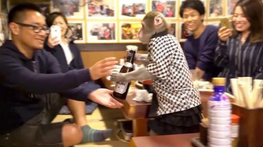 Quán bar Nhật Bản gây sốc với bồi bàn là khỉ - Ảnh 1.