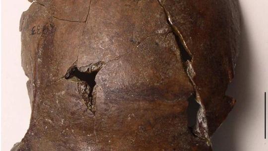 Phát hiện hộp sọ nạn nhân sóng thần xưa nhất Trái đất? - Ảnh 1.