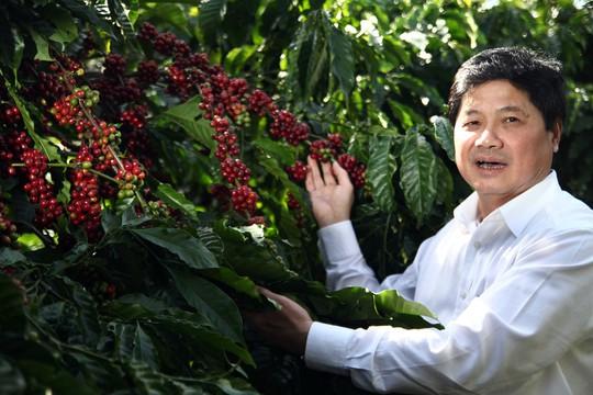 Cà phê Việt yếu từ tổ chức sản xuất đến chế biến - Ảnh 1.