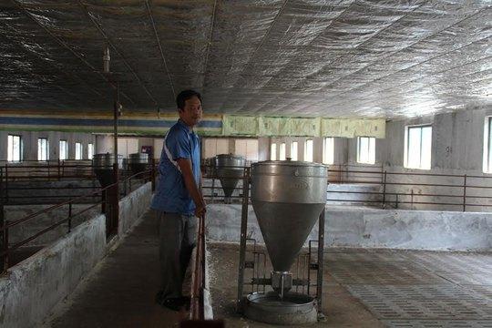 Giá heo thấp kỷ lục, nhiều hộ chăn nuôi Đồng Nai phá sản, bỏ trống chuồng trại Ảnh: XUÂN HOÀNG