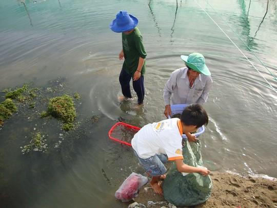 Mô hình nuôi kết hợp tôm sú - hải sâm - rong nho ở tỉnh Ninh Thuận đã thành công bước đầu và chuẩn bị được nhân rộng