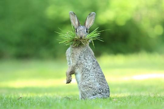 Chùm ảnh siêu hài hước về động vật thế giới 2017 - Ảnh 11.
