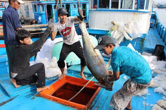 Tỉnh Khánh Hòa mong được hợp tác nhiều hơn với Nhật trong việc đánh bắt, xuất khẩu cá ngừ Ảnh: KỲ NAM