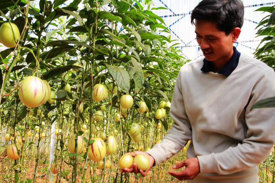 Các quy định hiện hành chưa thu hút doanh nghiệp đầu tư mạnh vào nông nghiệp. Trong ảnh: Trồng dưa pepino bằng công nghệ cao ở Lâm Đồng Ảnh: ĐÌNH THI
