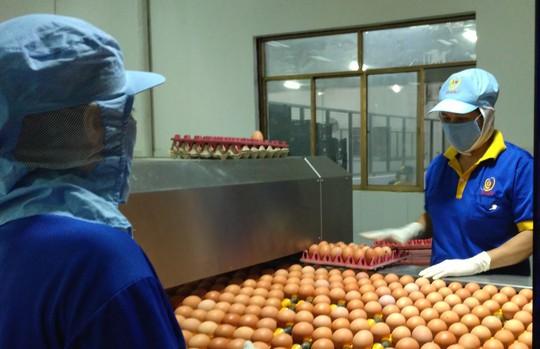 Trứng gà đạt chứng nhận chuỗi chiếm trên 50% thị phần - Ảnh 1.