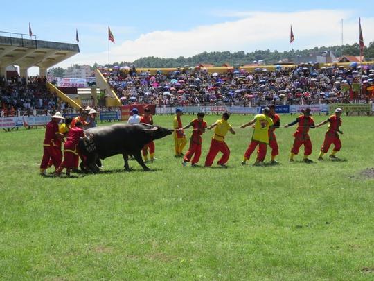 Khán giả, bảo vệ la hét, bỏ chạy trong hội chọi trâu Đồ Sơn - Ảnh 2.
