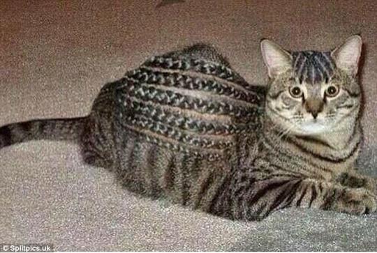 Những chú mèo có bộ lông độc đáo ai cũng phải bật cười - Ảnh 16.