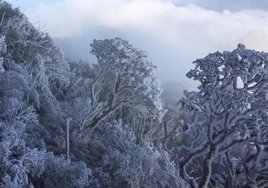 Cận cảnh đỉnh Fansipan trắng xóa trong băng tuyết - Ảnh 16.