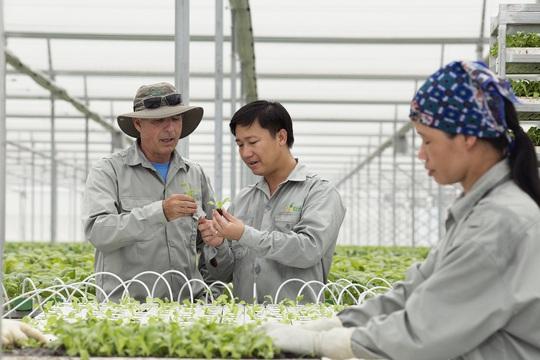Khu nhà kính tại VinEco Tam Đảo có diện tích 1,5 ha đang sản xuất rau mầm, rau thủy canh và sử dụng công nghệ nhà kính của Teshuva Agricultural Projects (TAP, Israel)