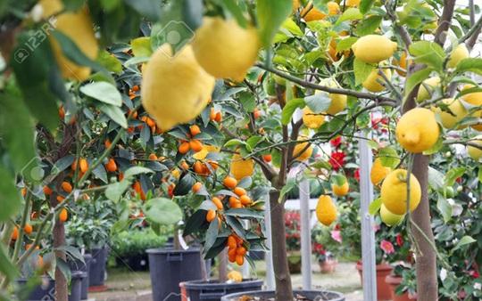 Vỏ và hạt cam: Nguồn cảm hứng kinh doanh ở Sicily - Ảnh 1.