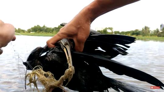 Dân Sài Gòn bắt được chim cổ rắn, tặng ngay Thảo Cầm Viên - Ảnh 1.