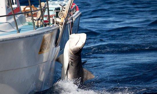 Mọi giải pháp ngăn chặn cá mập tấn công người sẽ được chính phủ Úc cân nhắc... Ảnh: AAP