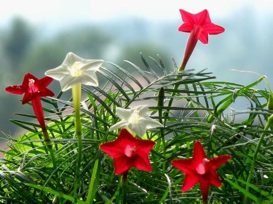 Hoa tóc tiên của cha - Ảnh 1.