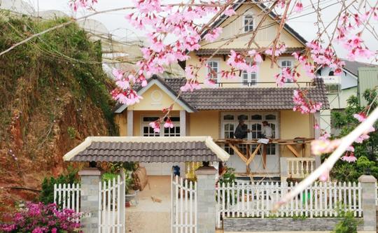 Tỉnh Lâm Đồng hủy tổ chức Ngày hội hoa mai anh đào Đà Lạt do thời tiết bất lợi.