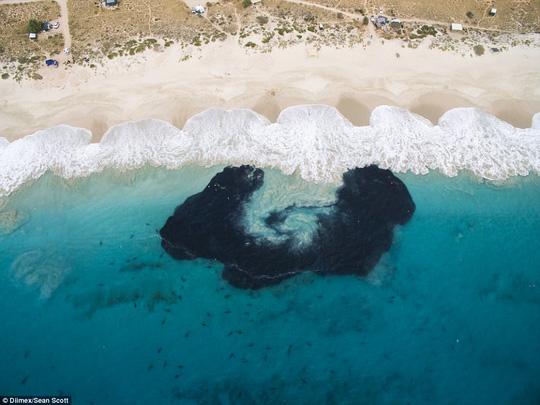 Kinh hoàng nhóm học sinh bơi lội bên trên 400 con cá mập - Ảnh 2.