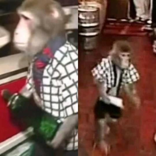 Quán bar Nhật Bản gây sốc với bồi bàn là khỉ - Ảnh 2.