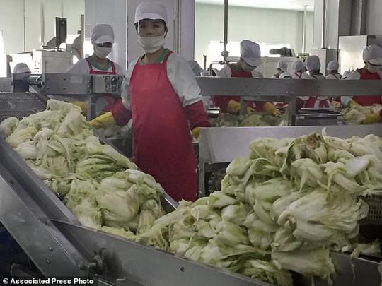 Ông Kim Jong-un: Làm kimchi cũng phải ứng dụng khoa học - Ảnh 2.